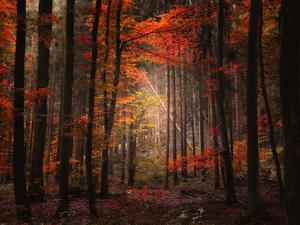 Orton Wood by Philippe Sainte-Laudy