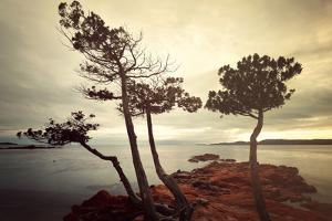Palombaggia Trees by Philippe Sainte-Laudy