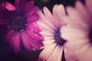 Petals by Philippe Sainte-Laudy