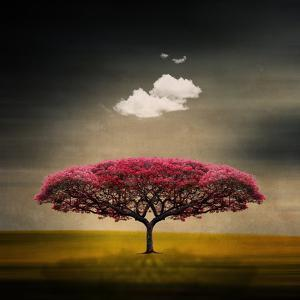 Tree and Clouds by Philippe Sainte-Laudy Photography