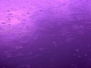 Purple Rain by Philippe Sainte-Laudy