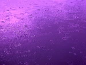 Purple Rain by Philippe Sainte-Laudy