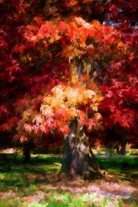 Red Oak by Philippe Sainte-Laudy