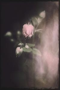 September Melancholia by Philippe Sainte-Laudy