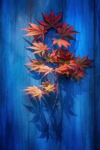 Shadow Blue by Philippe Sainte-Laudy