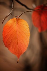 Symbol of Autumn by Philippe Sainte-Laudy