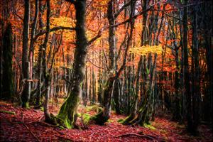The Colors of the Woods by Philippe Sainte-Laudy