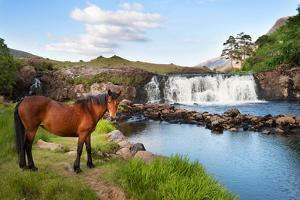 The Horse Near the Waterfall by Philippe Sainte-Laudy