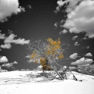The Tree That Would Not Die by Philippe Sainte-Laudy