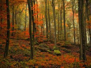 Transformation Fall by Philippe Sainte-Laudy
