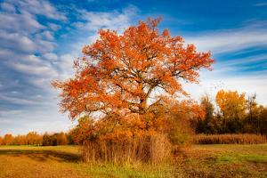 Tree Symbol of Autumn by Philippe Sainte-Laudy