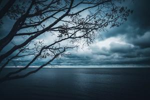 True Blue by Philippe Sainte-Laudy