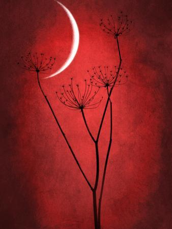 Under the Moon 2 by Philippe Sainte-Laudy