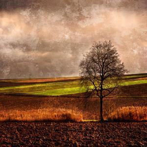 Van Gough's Mind by Philippe Sainte-Laudy