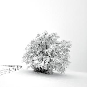 White is back by Philippe Sainte-Laudy