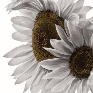 White Softness by Philippe Sainte-Laudy