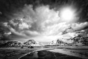 Winter Bird by Philippe Sainte-Laudy