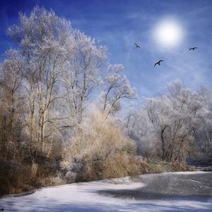 Winter Escape by Philippe Sainte-Laudy