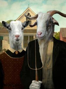 American Goat by Philippe Tyberghien
