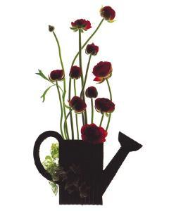 Wild Buttercups, Watering Can by Philippe Ughetto