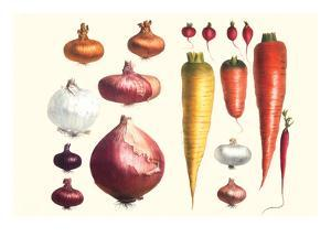 Onions Carrots and Turnips by Philippe-Victoire Leveque de Vilmorin