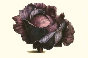 Purple Cabbage by Philippe-Victoire Leveque de Vilmorin