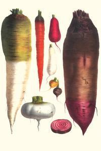 Tubers by Philippe-Victoire Leveque de Vilmorin