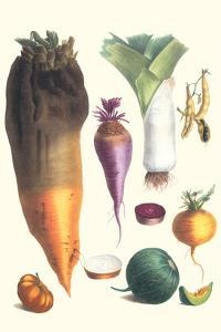 Various Vegetables by Philippe-Victoire Leveque de Vilmorin