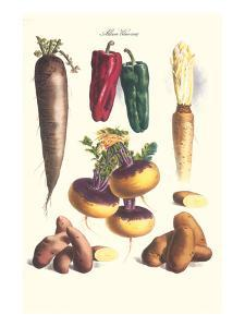 Vegetables; Bell Peppers, Turnips, Potato, Bok Choy and Tubers by Philippe-Victoire Leveque de Vilmorin