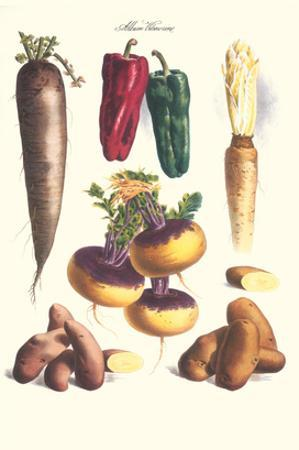 Vegetables; Bell Peppers, Turnips, Potato, Bok Choy and Tubers