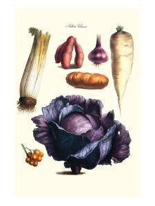 Vegetables; Cabbage, Celery, Yam, Potato, Onion, Tomato, Horse Raddish by Philippe-Victoire Leveque de Vilmorin