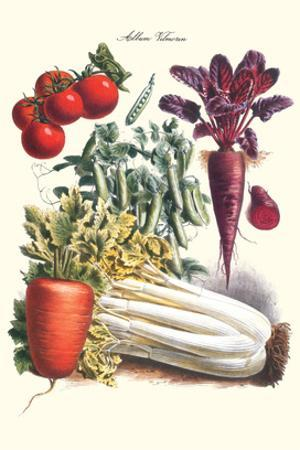 Vegetables; Carrot, Beet, Tomato, and Celery