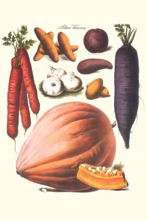 Vegetables; Carrot, Potato, Onion, and Pumpkin