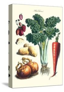 Vegetables; Celery, Strawberry, Onion, Carrot, and Potato by Philippe-Victoire Leveque de Vilmorin