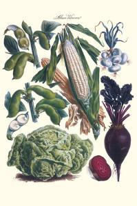 Vegetables; Corn, Cabbage, Beet, Onion, and Beans by Philippe-Victoire Leveque de Vilmorin