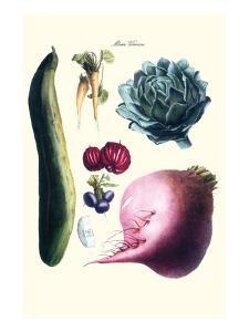 Vegetables; Cucumber, Raddish, Tuber, Artichoke by Philippe-Victoire Leveque de Vilmorin
