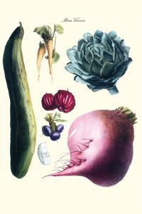 Vegetables; Cucumber, Raddish, Tuber, Artichoke by Philippe-Victoire Leveque de Vilmorin