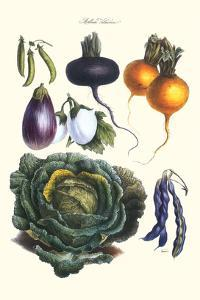 Vegetables; Eggplant, Beans, Cabbage, Turnips by Philippe-Victoire Leveque de Vilmorin