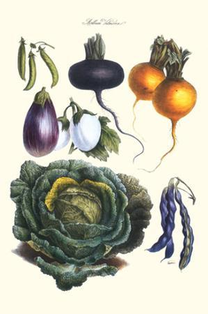 Vegetables; Eggplant, Beans, Cabbage, Turnips