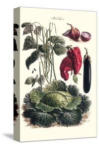 Vegetables; Eggplant, Cabbage, Peppers, Onions, and Beans. by Philippe-Victoire Leveque de Vilmorin