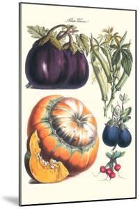 Vegetables; Eggplant, Raddish, Pumpkin, Gourd, Pepper and Okra by Philippe-Victoire Leveque de Vilmorin