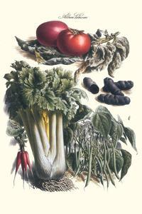 Vegetables; Green Beans, Purple Sweet Potato, and Tomato by Philippe-Victoire Leveque de Vilmorin