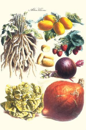 Vegetables; Lettuce, Persimmon, Turnip, Potato, Pumpkin, Strawberries, and Legumes