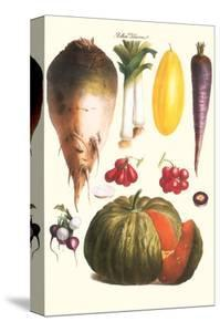 Vegetables: Melon, Purple Carrot, Cherry Tomatoes, Onions, Turnip, Leek by Philippe-Victoire Leveque de Vilmorin