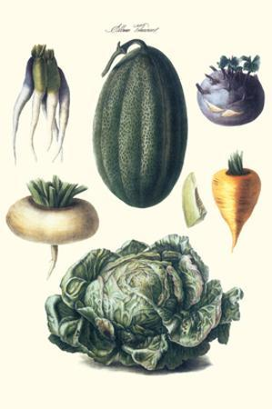 Vegetables; Melon, Turnip, Lettuce, Cabbage,