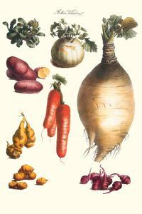 Vegetables; Onion, Potato, Carrot, Roots, Tubers by Philippe-Victoire Leveque de Vilmorin