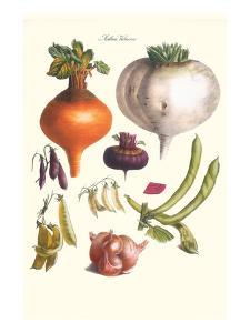 Vegetables; Peas, Onion, Turnip, Raddish, Green Beans by Philippe-Victoire Leveque de Vilmorin