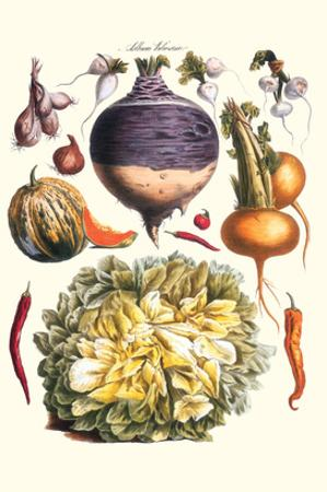 Vegetables; Peppers, Onion, Raddish, Tubers, Pumpkin, and Lettuce