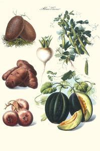 Vegetables; Potato, Melon, Raddish, Peas, Onions by Philippe-Victoire Leveque de Vilmorin