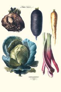 Vegetables; Rhubard, Tubers, and Cabbage by Philippe-Victoire Leveque de Vilmorin